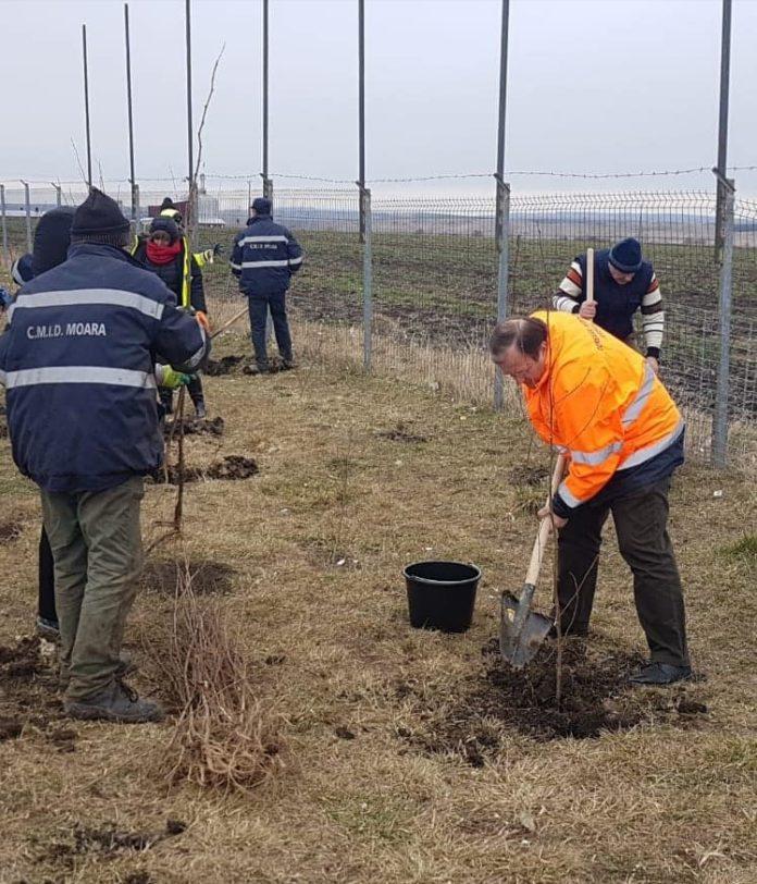 campanie plantare copaci Moara